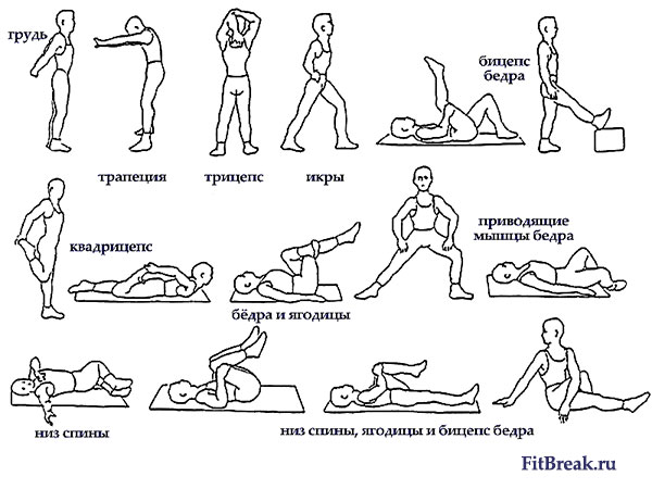 Упражнения на растяжку мышц после силовой тренировки фото.