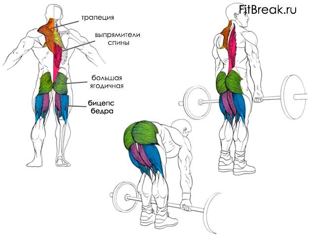становая тяга мышцы