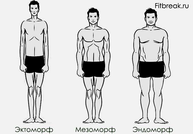 Определение типа телосложения мужчин
