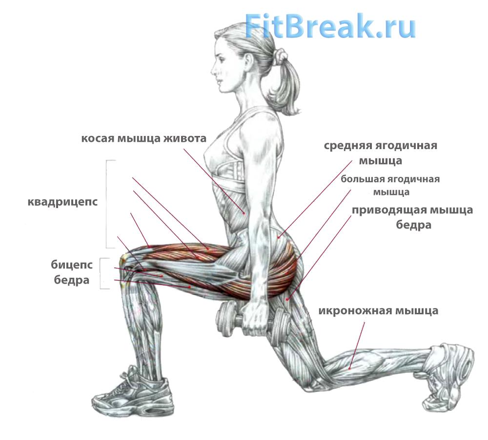 Выпады: работающие мышцы