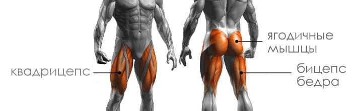 как делать правильные отжимания - какие мышцы ног работают