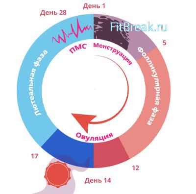 менструальный цикл у женщин и фитнес
