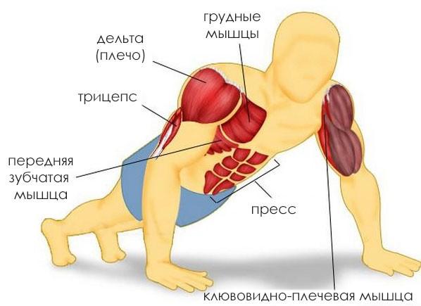 отжимания от пола какие мышцы работают