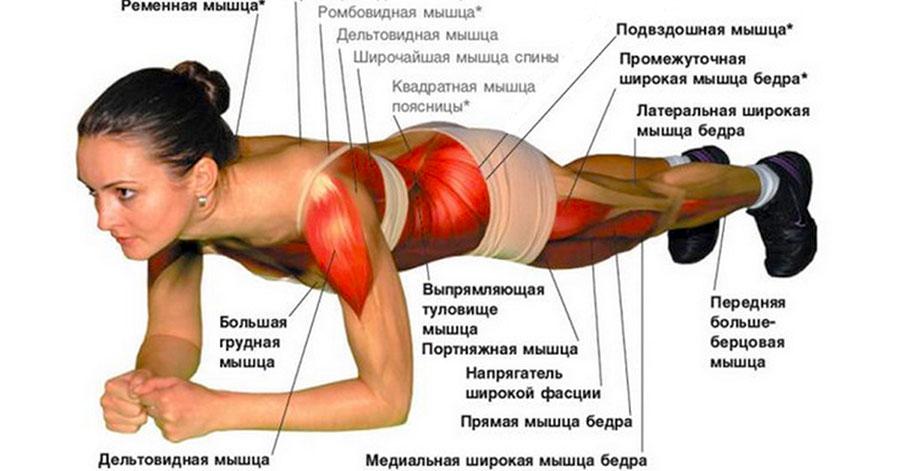 планка какие мышцы работают