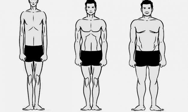 Определение типа телосложения мужчин (эктоморф, мезоморф или эндоморф)